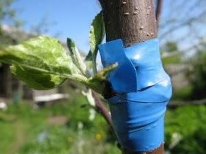 Как прививать растения