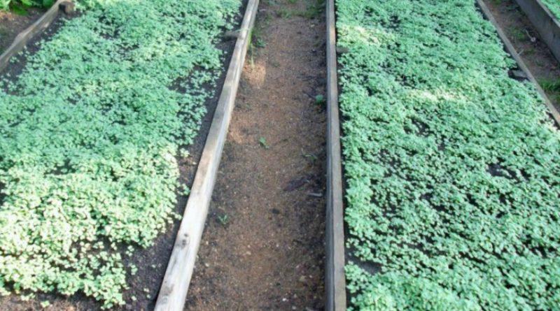 Уничтожение сорняков на дачном участке