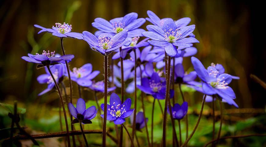 Расцветший цветок