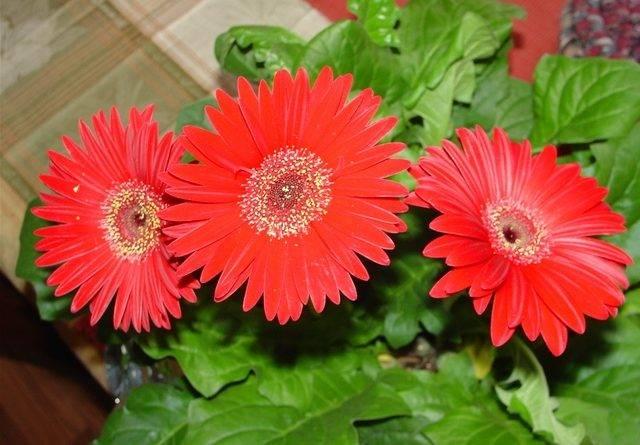 Как называется цветок с красными цветами