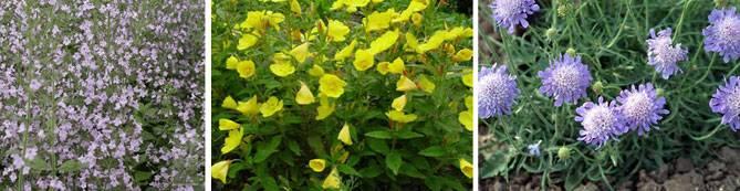 Цветы в огороде фото и название