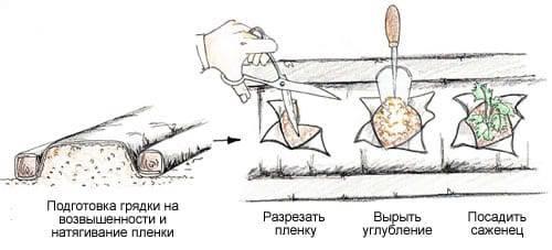 Пленка для грядок от сорняков