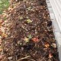 Уход за флоксами осенью подготовка к зиме