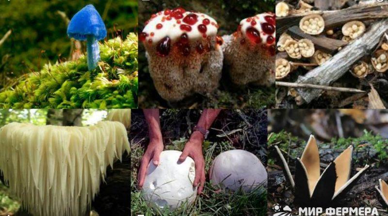 На что похож гриб по форме