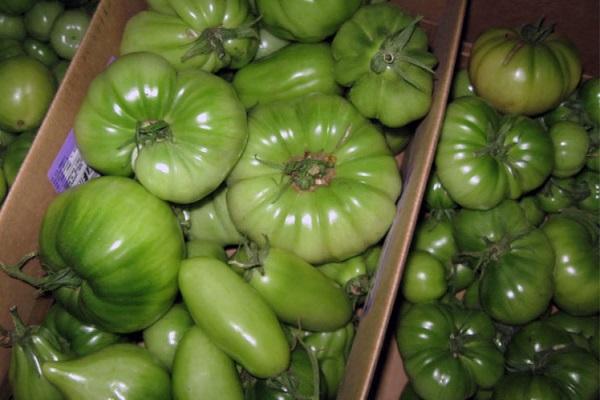 Дозревание помидоров в домашних условиях