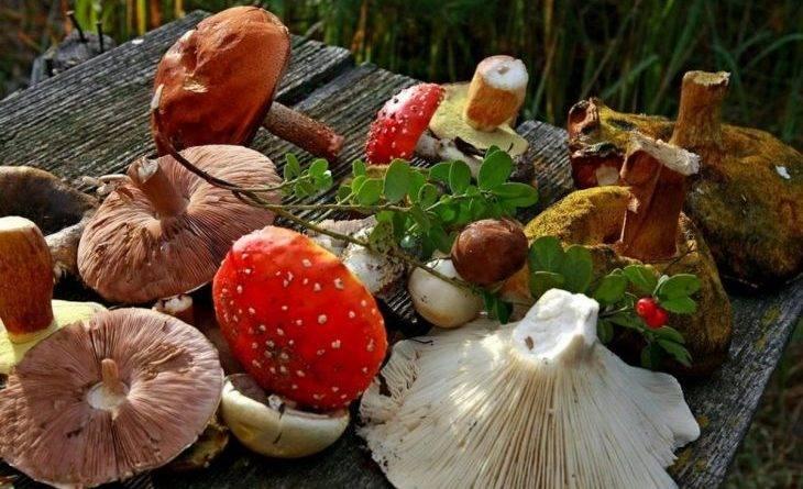 Мини энциклопедия съедобные и несъедобные грибы