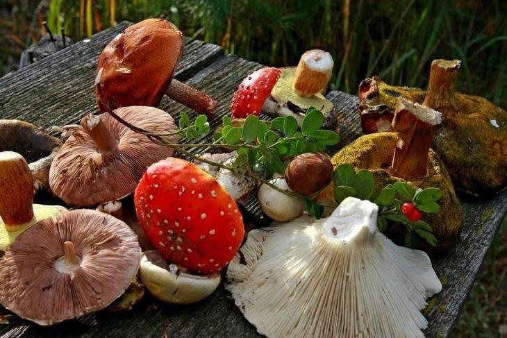 Список съедобных и несъедобных грибов