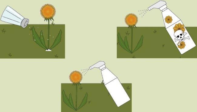 Борьба с одуванчиками на газоне