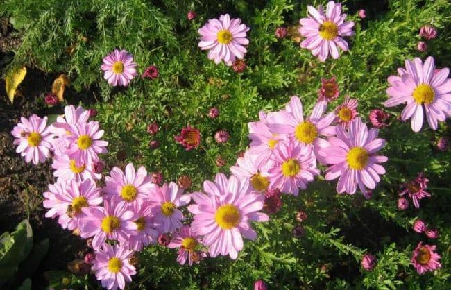 Эскиз цветника