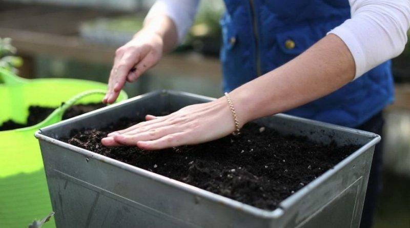 Состав земли для рассады помидоров