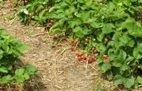 Нормы внесения органических удобрений