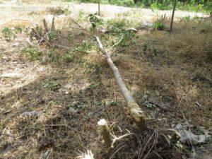 Как удалить поросль деревьев с участка