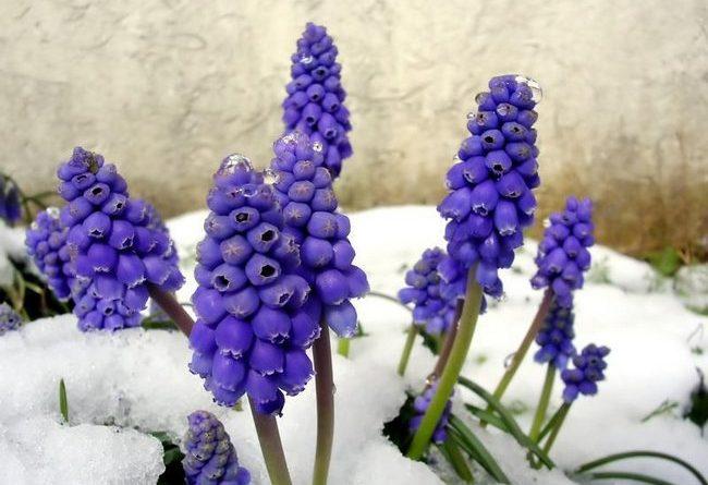 Какие цветы можно сажать под зиму семенами