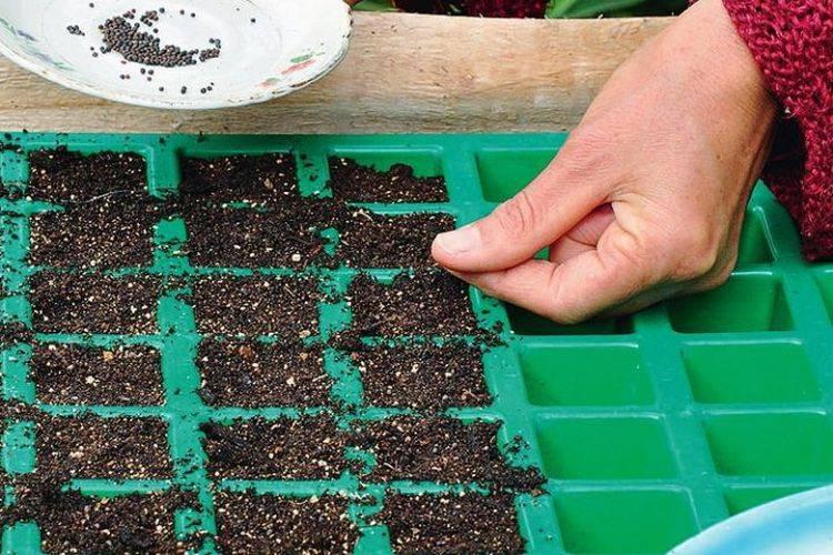 Какие семена можно сажать под зиму