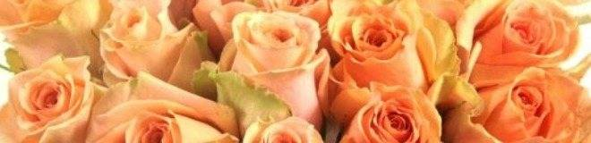 Температура для роз