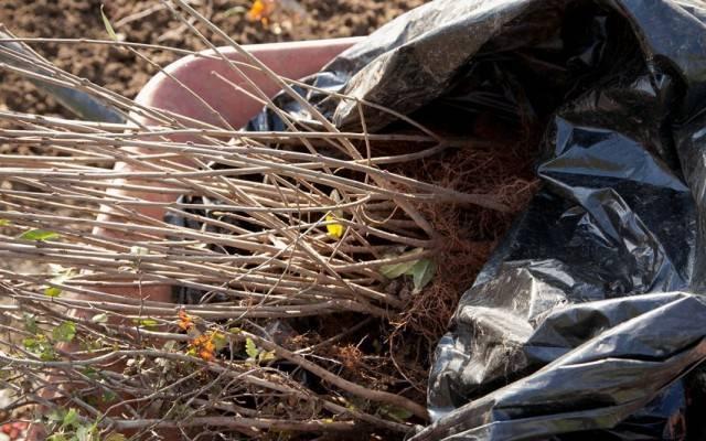 Боярышник фото дерева и листьев