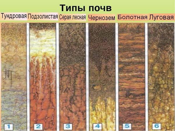 Типы почвы таблица