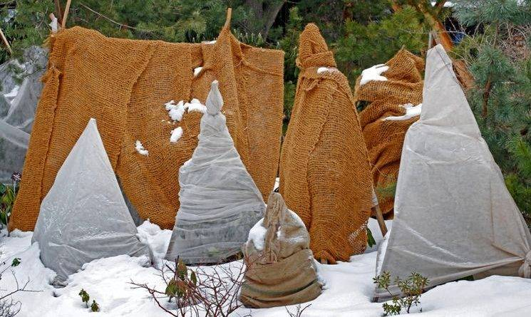 Утепление саженцев