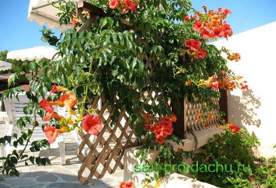 Оранжевые цветы фото и названия