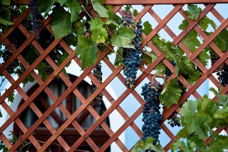 Стойки для винограда