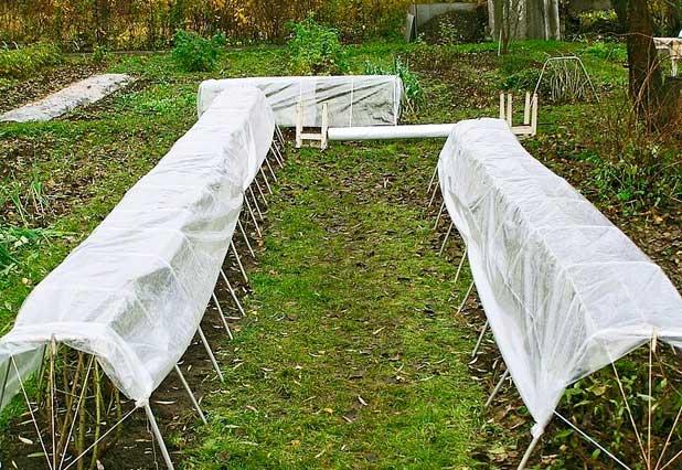 Как обрезать плетущиеся розы на зиму