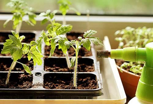 Азотные удобрения для рассады томатов