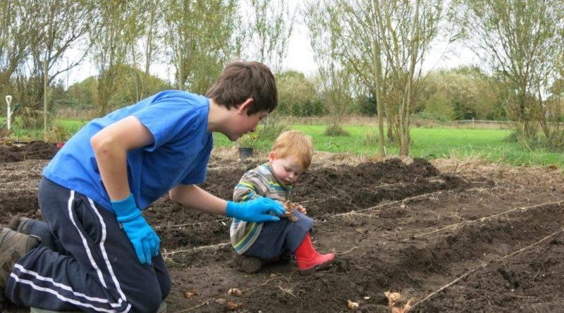 Как посадить гиацинты осенью
