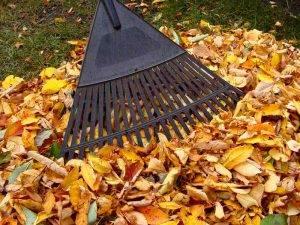 Что сажают осенью в саду и огороде