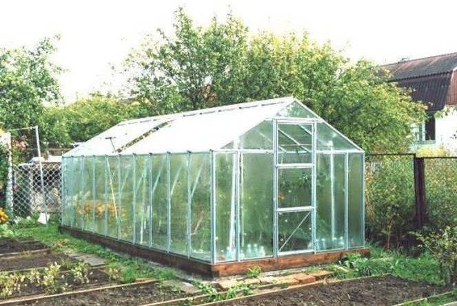 Бизнес на рассаде овощей