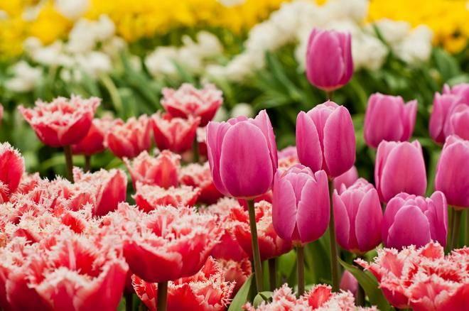 Какие цветы расцветают в мае жи ши