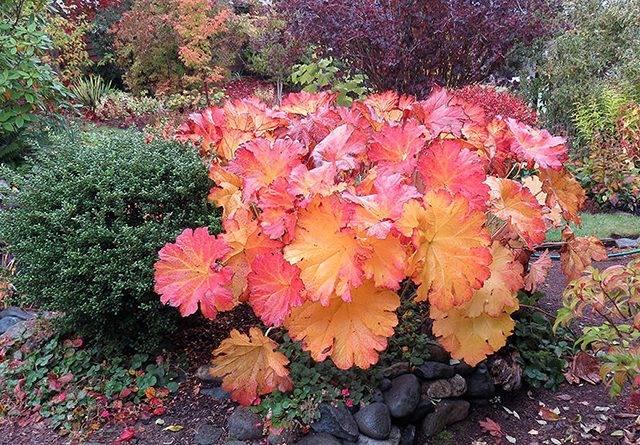 Растения с красивыми листьями для сада