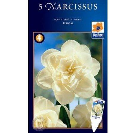 Нарцисс обдам