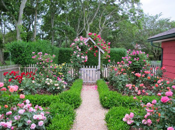 Розовый сад фото
