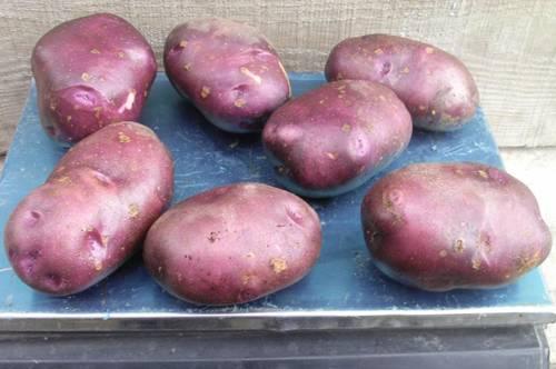 Картофель голубой дунай описание сорта