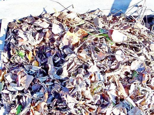 Удобрение из листьев деревьев