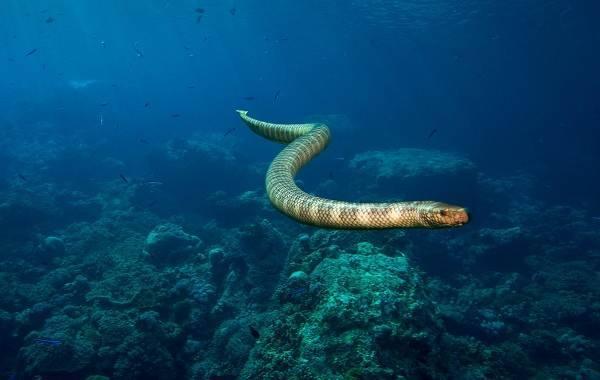 Змеи россии фото и названия