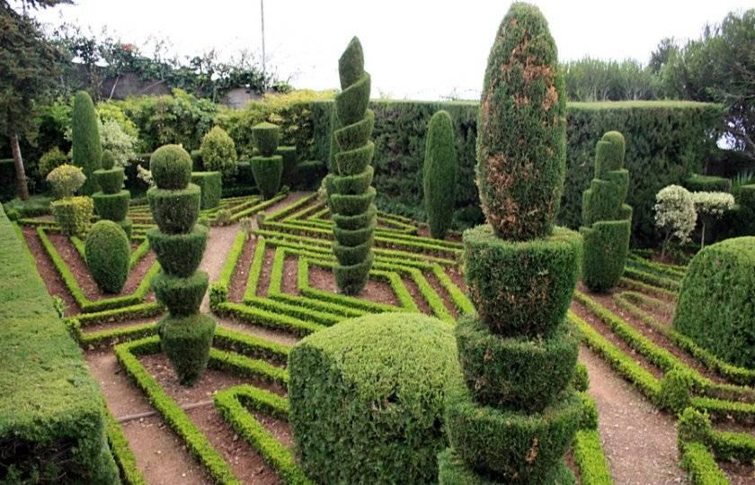 Декоративные хвойные растения для ландшафта
