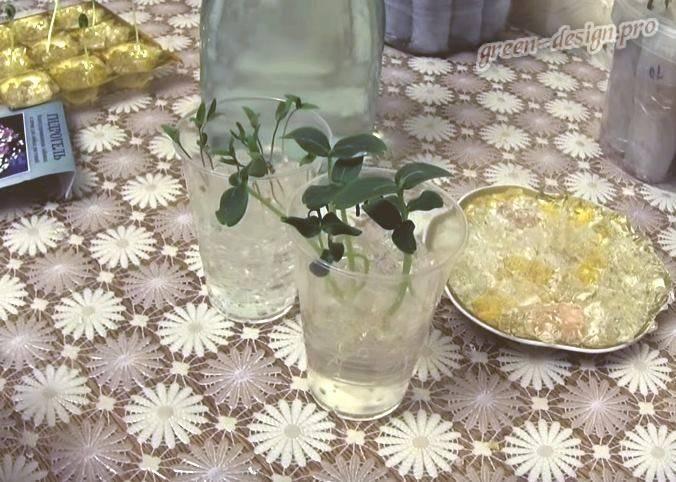 Какие растения можно выращивать в гидрогеле