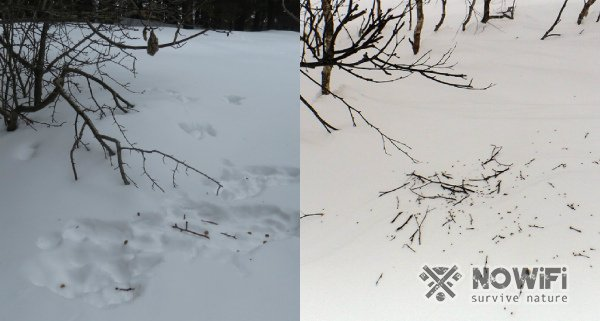 Следы зайца на снегу фото