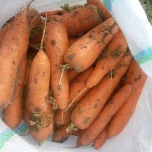 Морковь каскад фото