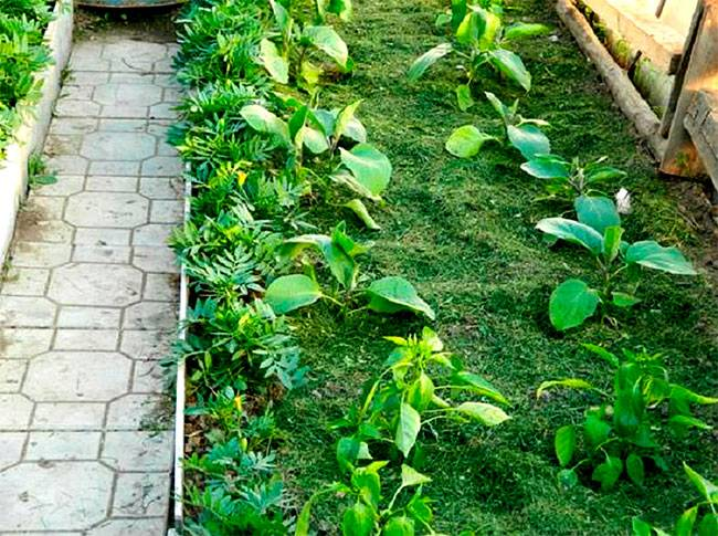 Сад и огород для ленивых
