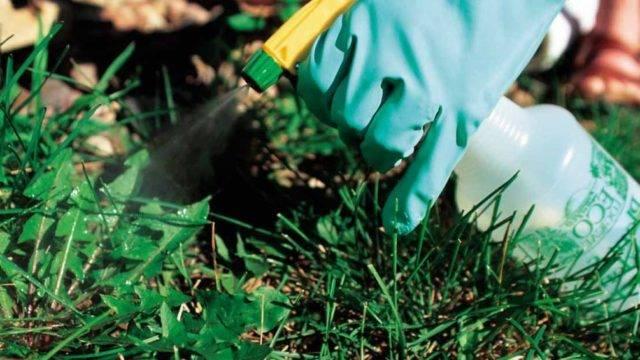 Как вывести сорняки с огорода
