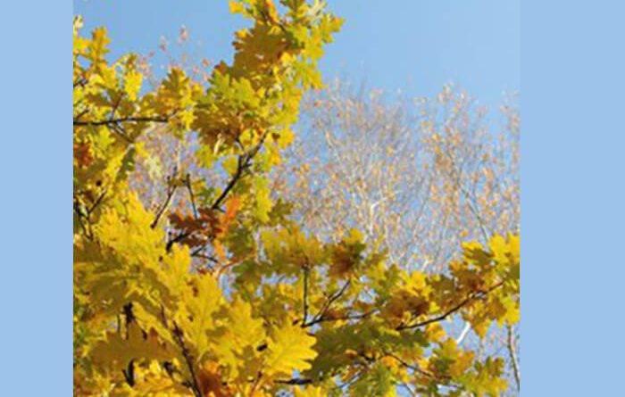 Какие деревья не сбрасывают листья на зиму