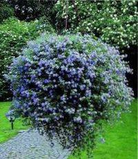 Ампельные растения для сада фото и названия