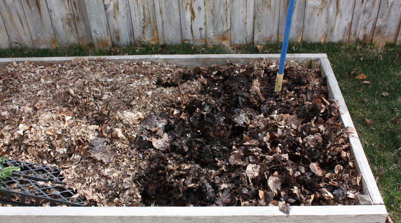 Когда вносить золу в почву