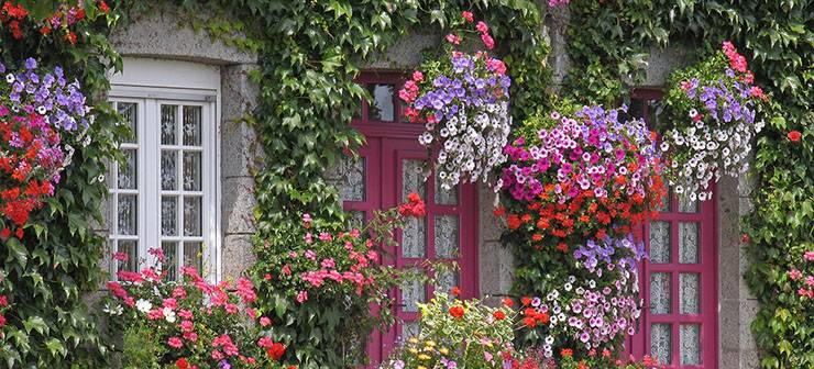 Цветники вдоль дорожек на даче