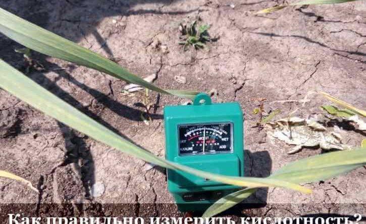 Как определить какая почва на участке