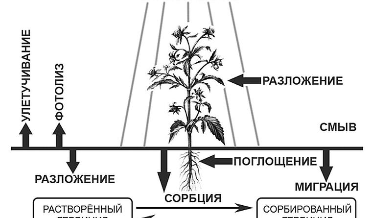 Как уничтожить корни деревьев химическим способом