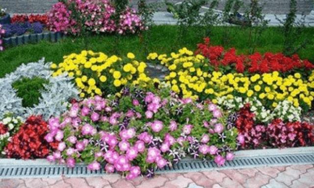 Цветы малинового цвета
