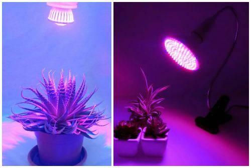 Лампочка для растений